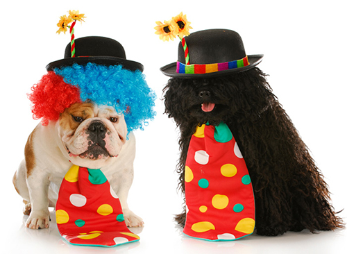 dogs dressed in clown costumes