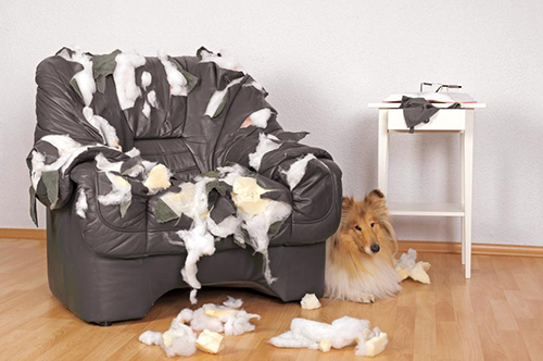 dog beside ripped up couch