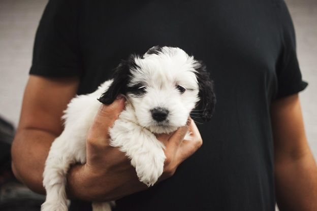 man holding puppy in hand